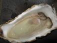 岩牡蠣(300円)