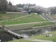 運河の花見3