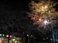 清水公園の夜桜6