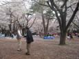 大宮公園のお花見2