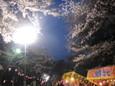 大宮公園のお花見6