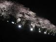 運河の夜桜
